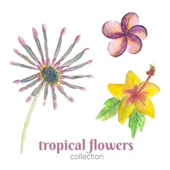 Collezione di fiori tropicali dell'acquerello.
