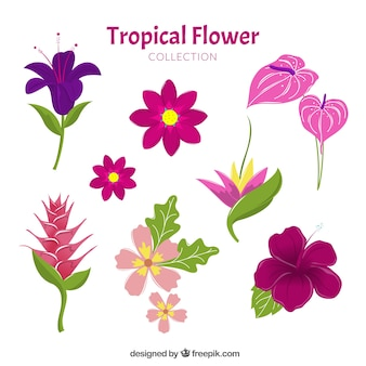 Collezione di fiori tropicali disegnata a mano incantevole