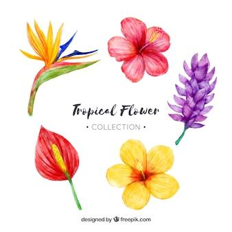 Collezione di fiori tropicali