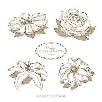 Collezione di fiori vintage disegnati a mano