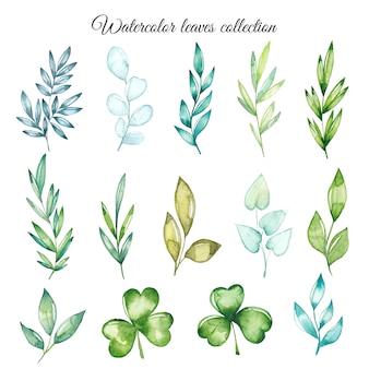 Collezione di foglie acquerellate