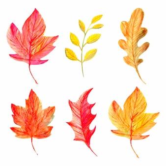 Collezione di foglie autunnali.