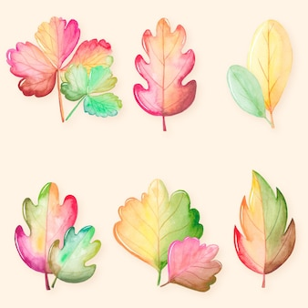Collezione di foglie di autunno dell'acquerello