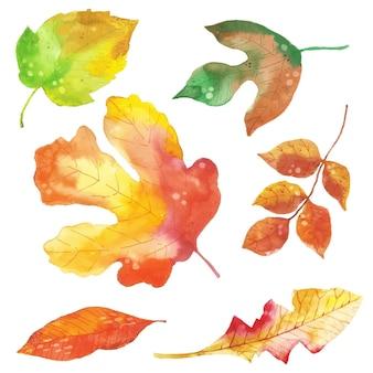 Collezione di foglie di autunno di disegno dell'acquerello