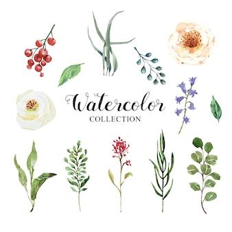 Collezione di foglie e set di fiori ad acquerello.