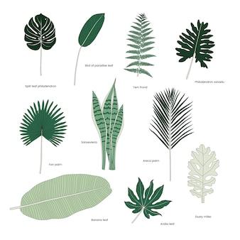 Collezione di foglie tropicali illustrate