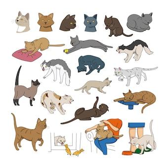 Collezione di gatti di razze diverse