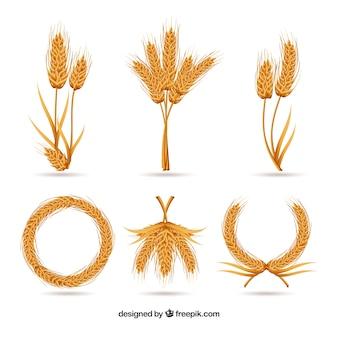 Collezione di grano realistico