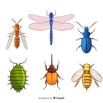 Collezione di insetti colorati