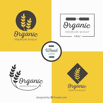 Collezione di logo di grano piatto