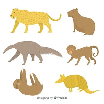 Collezione di mammiferi tropicali disegnati a mano