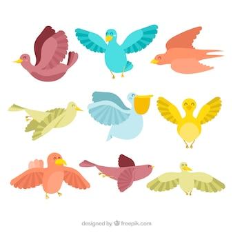 Collezione di nove uccelli colorati