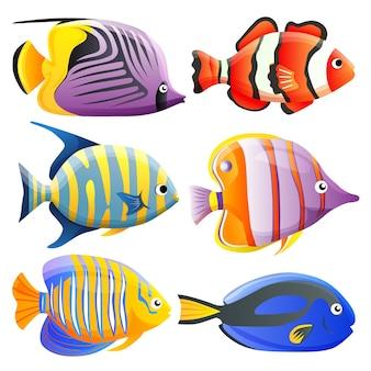 Collezione di pesci colorati dell'oceano