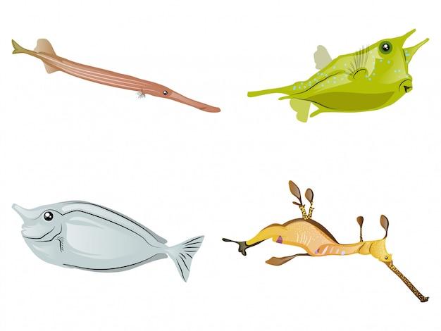 Collezione di pesci colorati