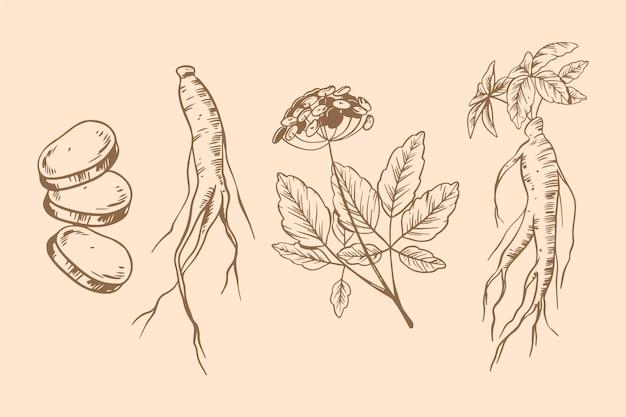 Collezione di piante di ginseng disegnare tema