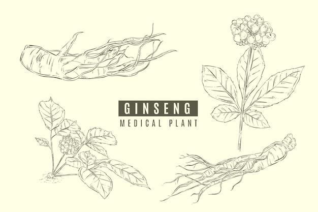 Collezione di piante di ginseng