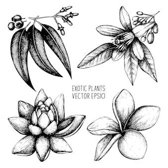 Collezione di piante esotiche. set di fiori tropicali abbozzato a mano.