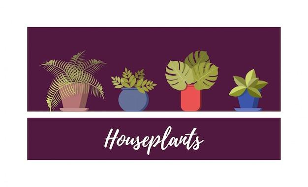 Collezione di piante in vaso
