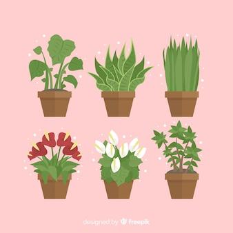 Collezione di piante