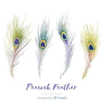 Collezione di piume di pavone disegnato a mano moderna