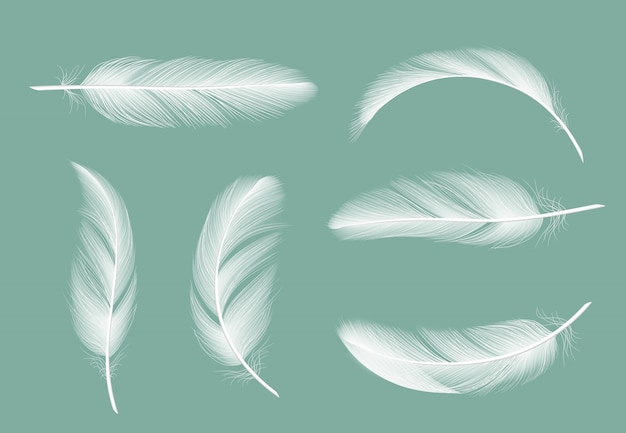 Collezione di piume. volante simile a pelliccia delle immagini realistiche dell'oca isolate su trasparente