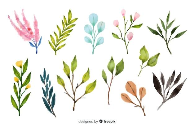 Collezione di rami floreali dell'acquerello