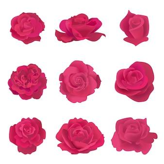 Collezione di rose rosse