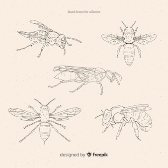 Collezione di schizzi di insetti disegnati a mano