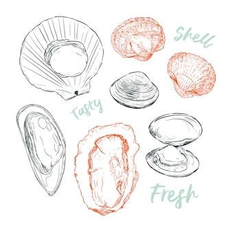Collezione di shell