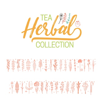 Collezione di tè alle erbe