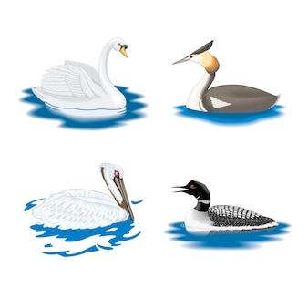 Collezione di uccelli acquatici