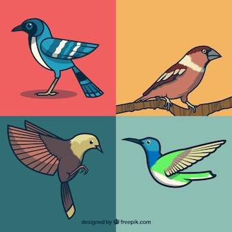 Collezione di uccelli disegnato a mano