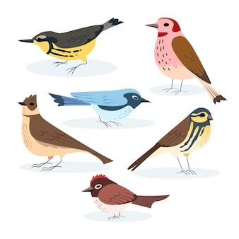 Collezione di uccelli disegno