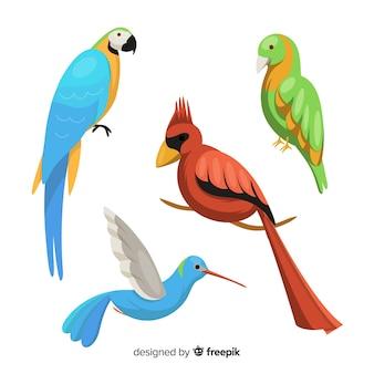 Collezione di uccelli esotici di design piatto