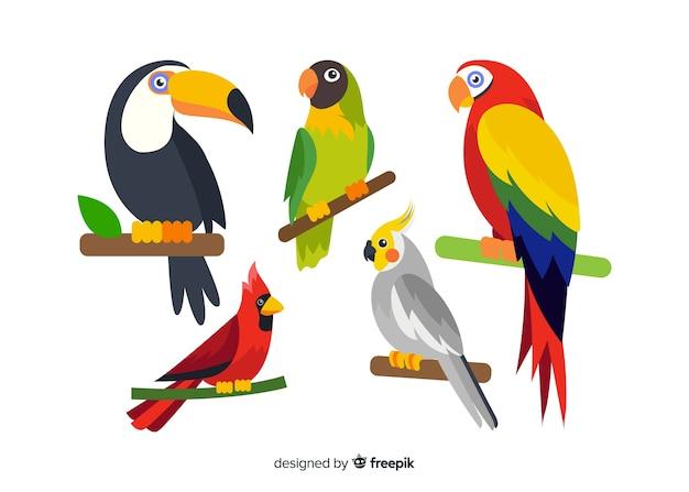 Collezione di uccelli esotici piatti