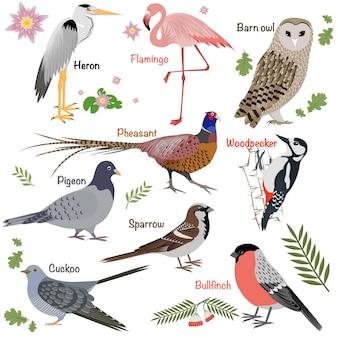 Collezione di uccelli realistici barbagianni e airone, ciuffolotto e fagiano, picchio e fenicottero.