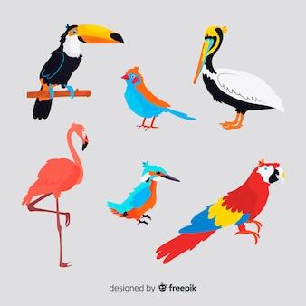 Collezione di uccelli selvatici tropicali esotici
