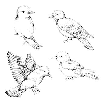 Collezione di uccelli sketch art
