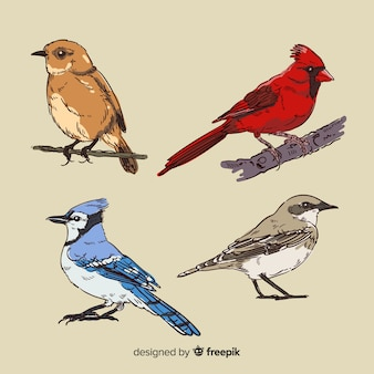 Collezione di uccelli tropicali disegnati a mano