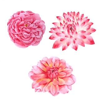 Collezione dipinta disegnata a mano dell'acquerello del fiore rosa