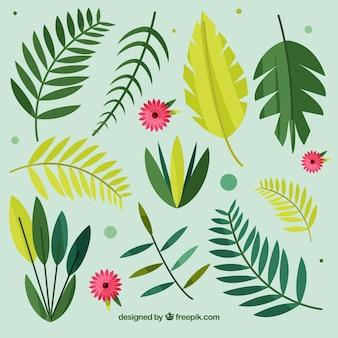 Collezione esotica di foglie tropicali con design piatto