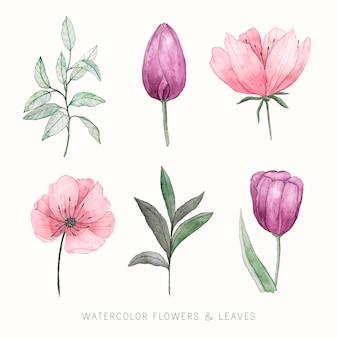 Collezione floreale acquerello dipinto a mano