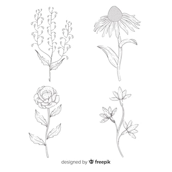 Collezione floreale disegnata a mano concetto