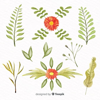 Collezione floreale in stile acquerello