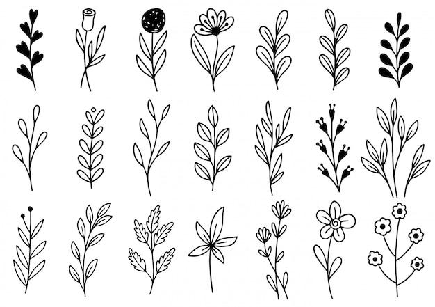 Collezione foresta felce eucalipto arte fogliame foglie naturali erbe in stile linea. fiore disegnato a mano