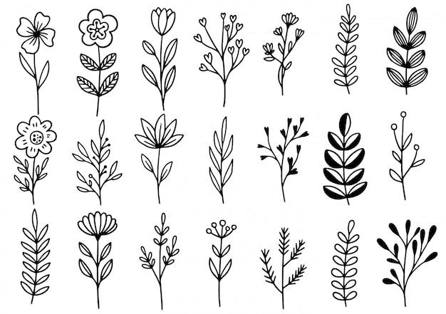 Collezione foresta felce eucalipto arte fogliame foglie naturali erbe in stile linea. illustrazione elegante di bellezza decorativa per fiore disegnato a mano di progettazione