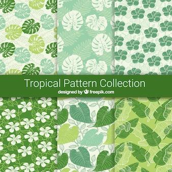 Collezione modello tropicale