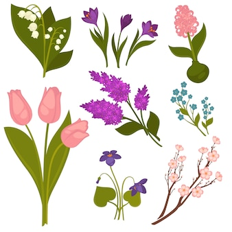 Collezione realistica di fiori di primavera su bianco.