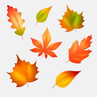 Collezione realistica di foglie d'autunno