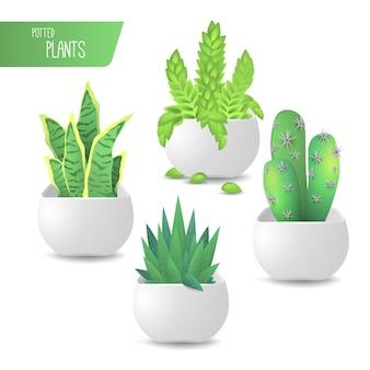 Collezione realistica di piante in vaso